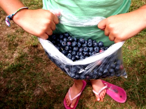 Rivers edge camping blueberries