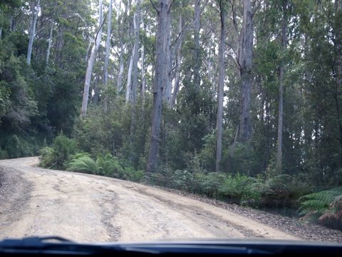 Bruny island driving