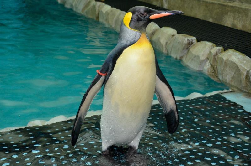 Ski Dubai penguin encounter