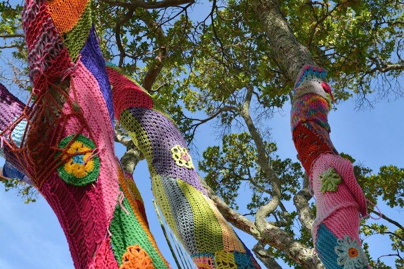 Rotorua yarn bombing tree